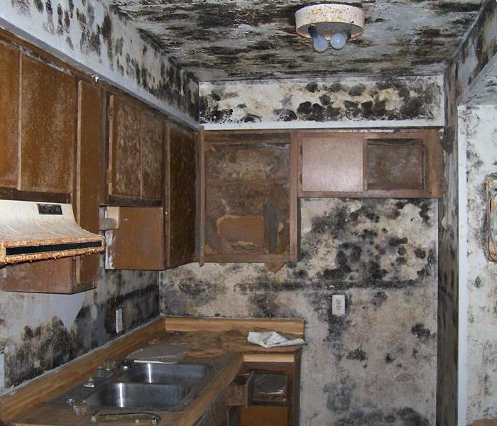Montgomery Kitchen Has Extensive Mold Damage