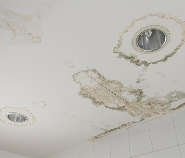Mold Remediation Mold Causes and Prevention