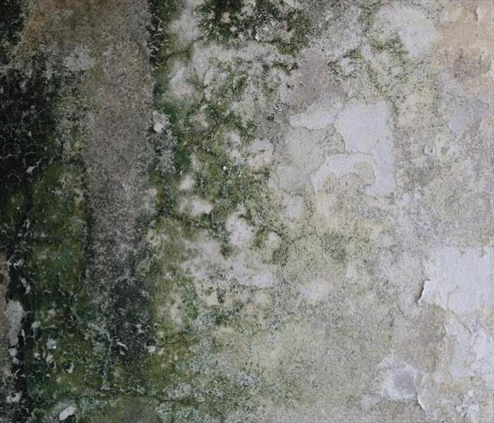 Mold Remediation Commonly Targeted Materials for Mold Growth in Your Montgomery Home