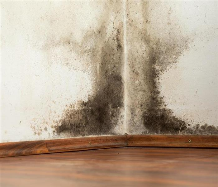 Mold Remediation Montgomery's Mold Damage Restoration Procedures Explained