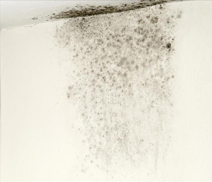 Mold Remediation Taking Control Of Mold Damage Found In Your Montgomery Home