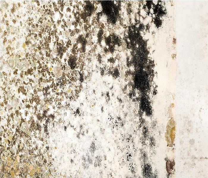 Mold Remediation Addressing Mold Damage Found In Your Montgomery Area Home