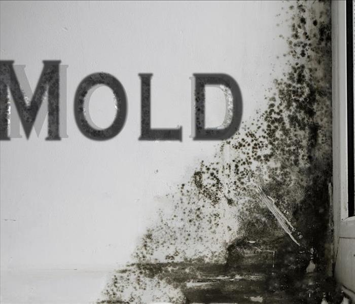 Mold Remediation Two Important Steps When Dealing with Mold Damage in Montgomery