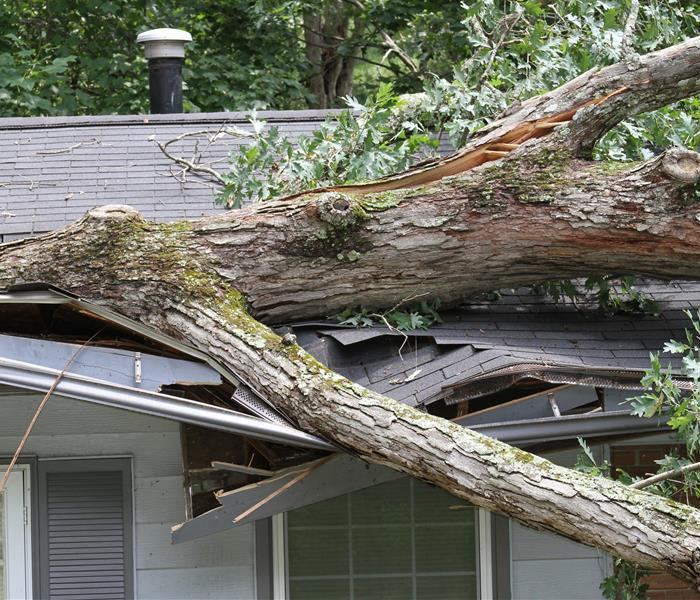 Storm Damage Storm Damage Restorers Are Available