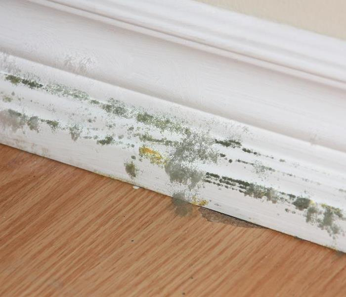 Mold Remediation Mold Damage in a Building Needs Help