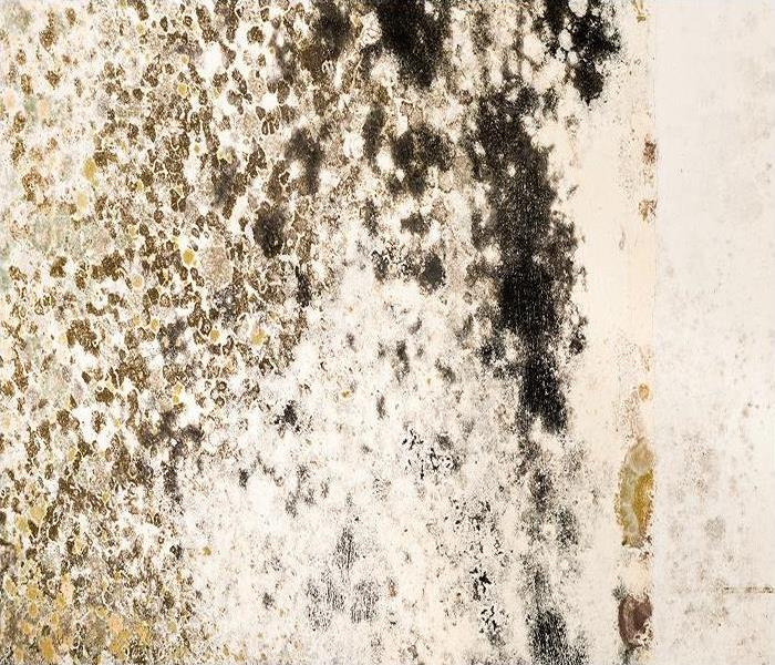 Commercial Overcoming Mold Damage In Your Montgomery Office Building